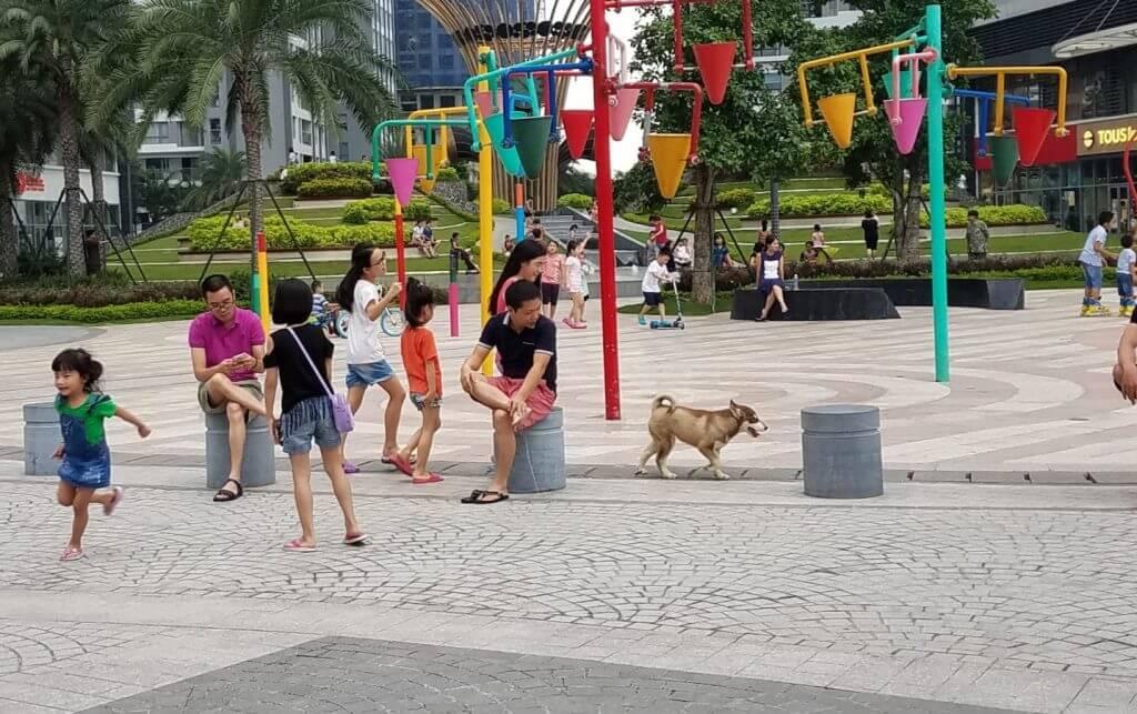 Chó thả rông không có rọ mõm